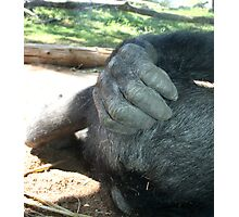 When it Itches, Gotta Scratch! Photographic Print
