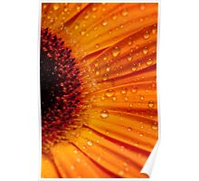 The Gerbera Series Poster