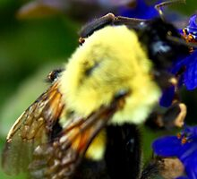 Happy To Bee Me by Angela Bashline