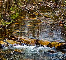 Rattlesnake Creek, May Day by Bryan D. Spellman