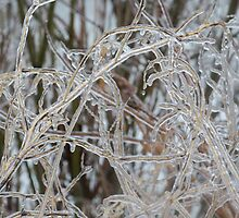 Ice Storm 2013 - Pale Frozen Grasses  by Georgia Mizuleva