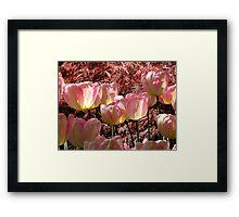 Petal Pink Framed Print