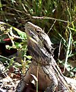 Bearded Dragon by Graeme  Hyde