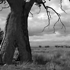 Scary Tree - Wilmington Paddock by Ben Loveday