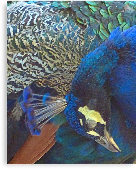 Peacock patterns by Linda Sparks