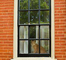 Kitty in the City by Mark Van Scyoc