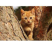 Mini cat 2 Photographic Print