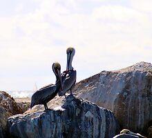 Pelicans 1139 by eruthart