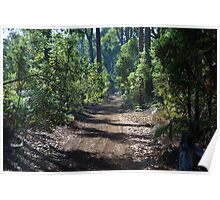 Forest Walk Poster