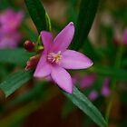Flower by Smarsh