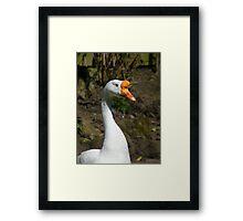 Goosey 2 Framed Print