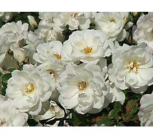 Roses (6185) Photographic Print