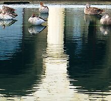 Winthrop Hall Reflection & Ducks by Eve Parry