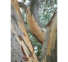Trees (6207) Photographic Print