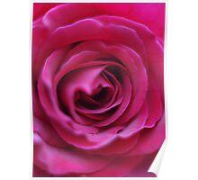 Rose # 5 Poster