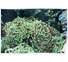 Green soft coral Poster