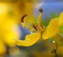 Wild Flower by tracyleephoto