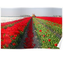 The end of the tulip season.....3 Poster