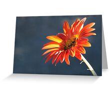 Sunkissed Orange Greeting Card
