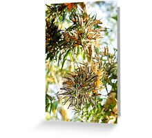 Butterfly Burst. Greeting Card