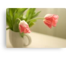 Pink Frilled Petal Tulips Canvas Print