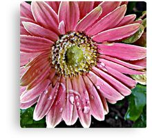 Oil Painting Pink Daisy Canvas Print