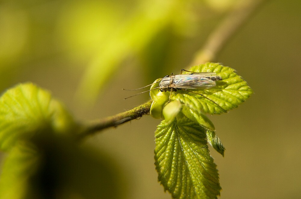Bug on a leaf by BizziLizzy