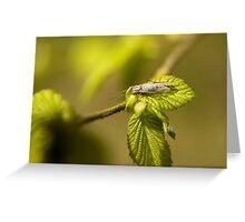 Bug on a leaf Greeting Card