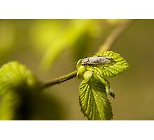 Bug on a leaf Photographic Print
