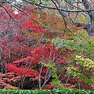 Mt Wilson NSW - Autumn Glory by Bev Woodman