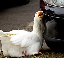 Goose Love by Cecily McCarthy