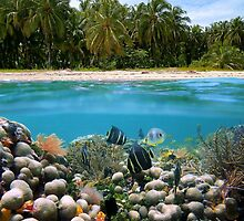 Tropical sandy beach and underwater coral reef fish by Dam - www.seaphotoart.com