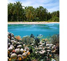 Tropical sandy beach and underwater coral reef fish Photographic Print