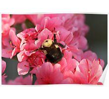 I Love Flowers! Poster