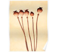 Seedheads Poster