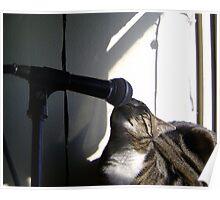 Rock 'n Roll Feline # 2 Poster