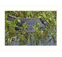 "American Alligator in the ""lettuce"" Art Print"