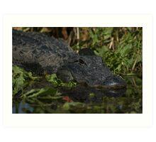 American Alligator - headshot Art Print