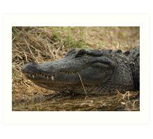 American Alligator - grin Art Print
