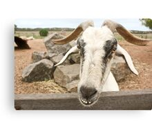 Goofy The Goat Canvas Print
