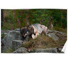 Let Sleeping Wolves Lie Poster