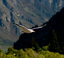 Wings of Freedom IV by Ivan Cunha