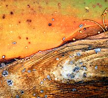 As Eye See Natural Abstracts by AsEyeSee