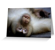 Not A Care In The World: Pig-tailed Macaque Portrait, Borneo  Greeting Card