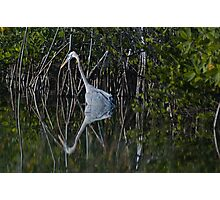 Heron Reflection Photographic Print