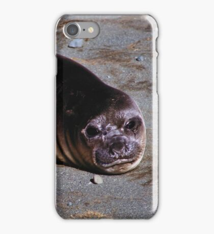 Southern Elephant Seal Pup, Macquarie Island   iPhone Case/Skin