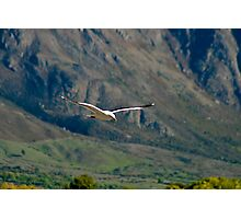 Wings of Freedom VII Photographic Print
