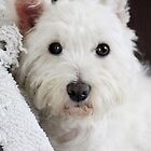 Those Westie Eyes by Gemma  Simpson