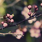 Springing... by HelenBeresford