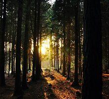 Light Through Leaves in Parkhurst Forest by JengaPix